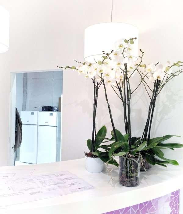 Plantas para oficinas y hogar