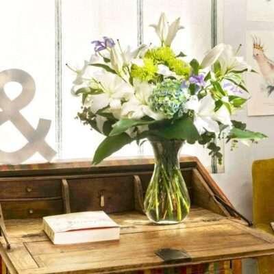 Plantas y flores para el hogar 2