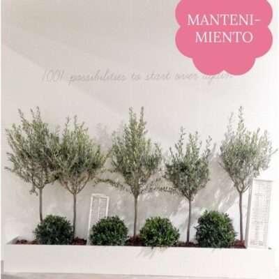 Ver mantenimiento de plantas