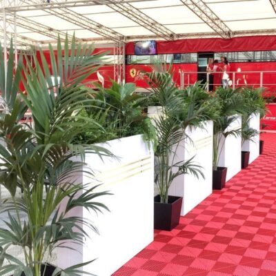 Plantas para ferias y eventos - Alquiler de plantas para eventos