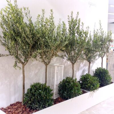 Plantas de interior para ferias 2