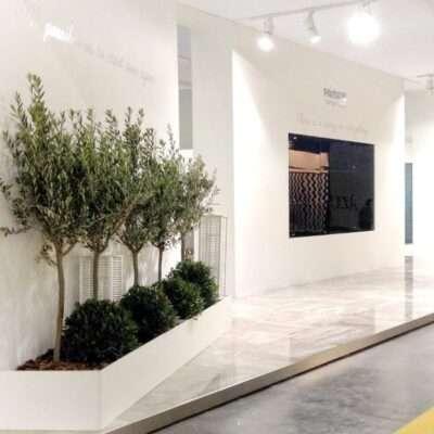 Plantas de interior para ferias