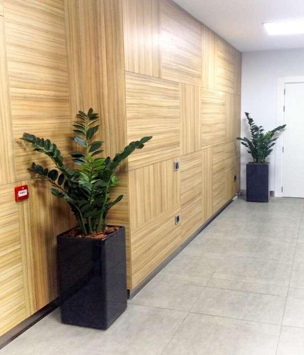 Plantas de oficina flores fela bodas y eventos for Plantas decorativas para oficina