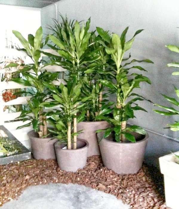 Plantas para negocios y ferias