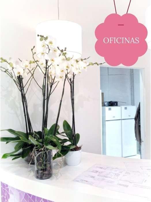 Ver plantas para showroom