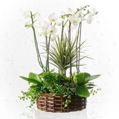 Flores de agradecimiento y regalo 4