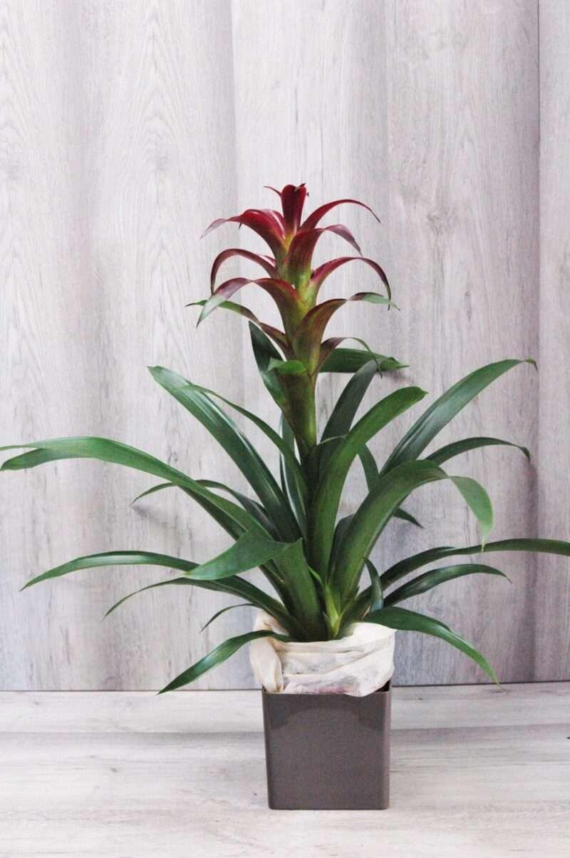 Plantas tropicales para el hogar