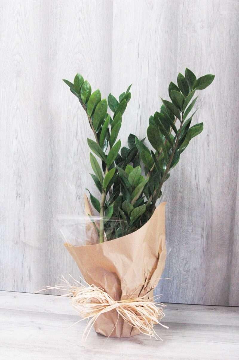 Una planta muy resistente
