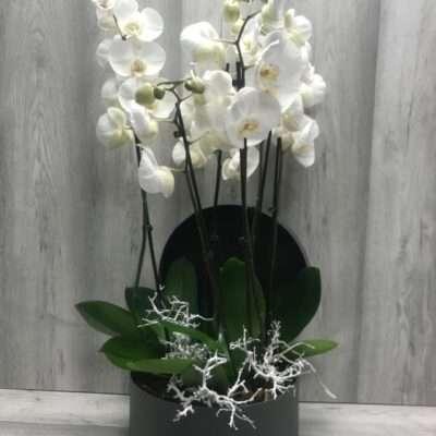 Las Orquídeas de la Casa