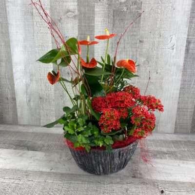 Plantas de temporada con flor fela hijo